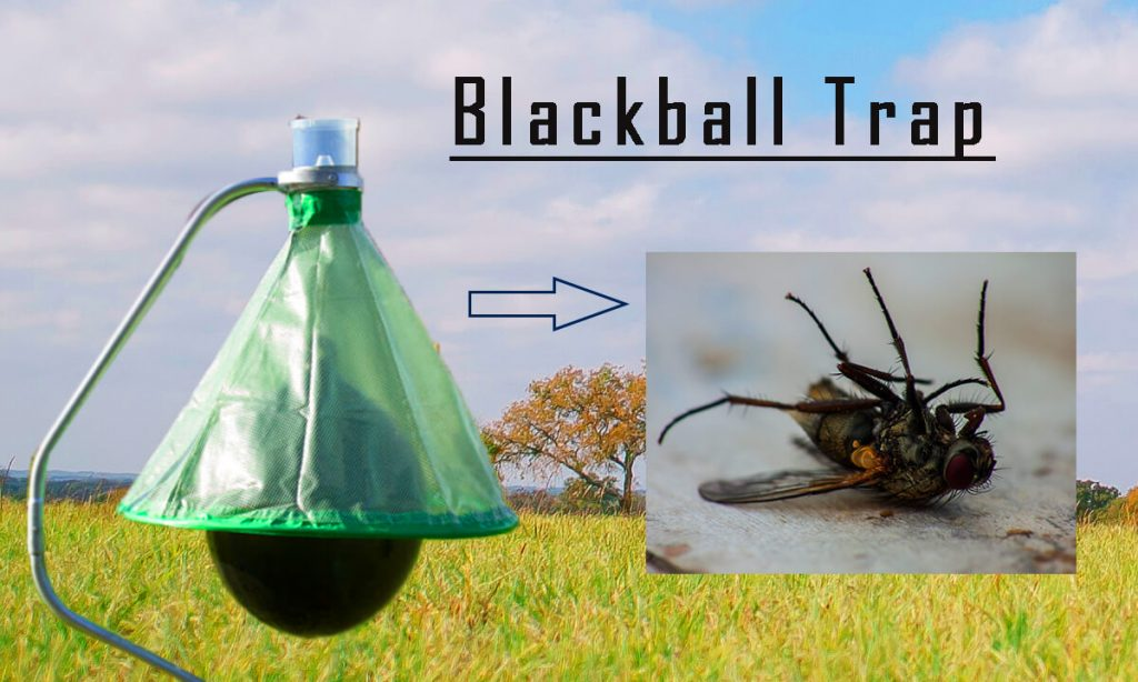 Blackball Trap