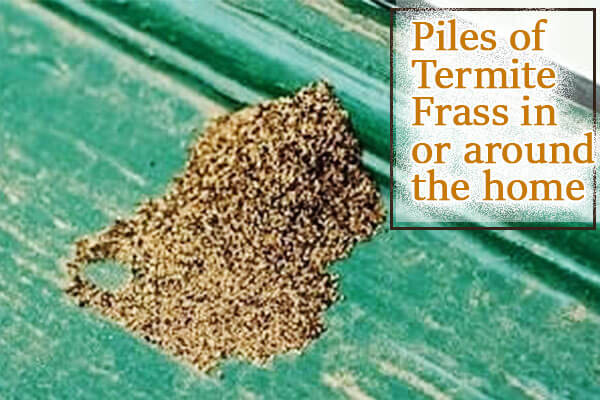 Piles of termite frass in or around the home