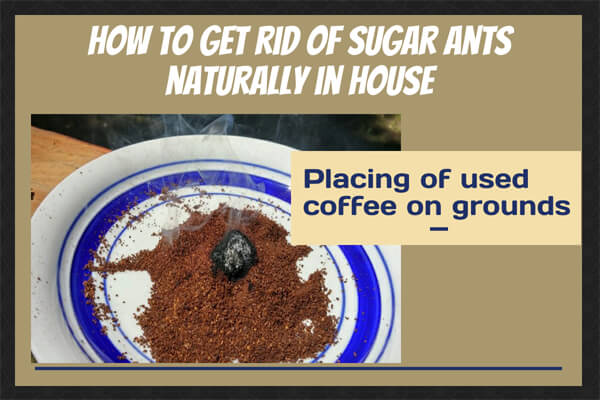 Placing of used coffee grounds